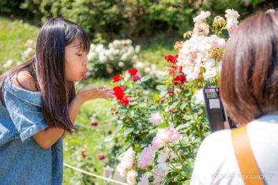 落ちた花びらを集めて吹いて背景に入れてみる。いきなり色々な撮影方法にチャレンジしていくのはこどもの凄いところ。
