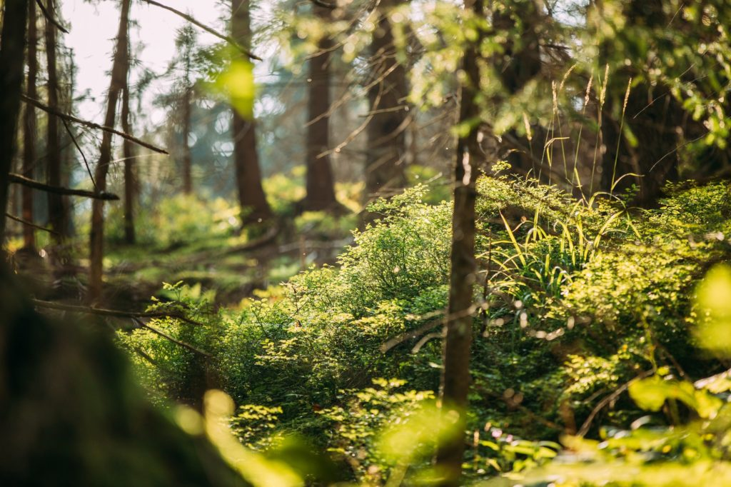 Wild Green Grass And Plants In Tatra Mountains Forest In Poland